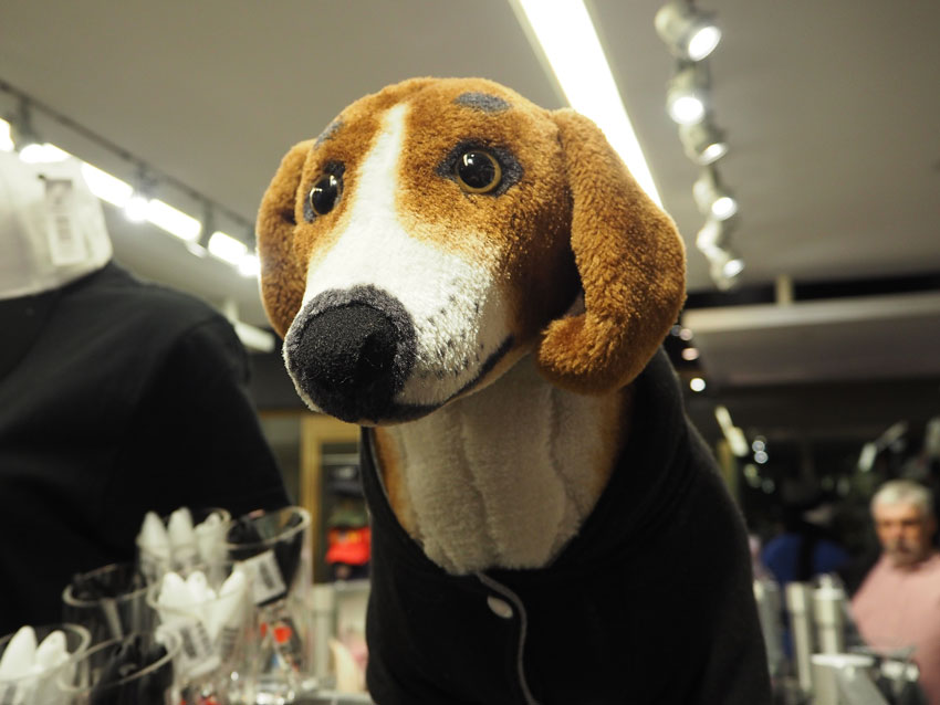 beagle-new-york