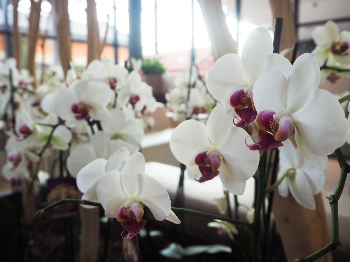 Orchids in reception/lobby - Hilton Garden Inn Milan North