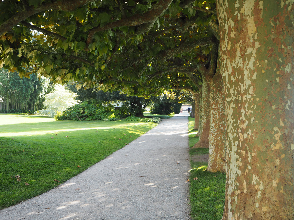 pretty-tree-lined-walk