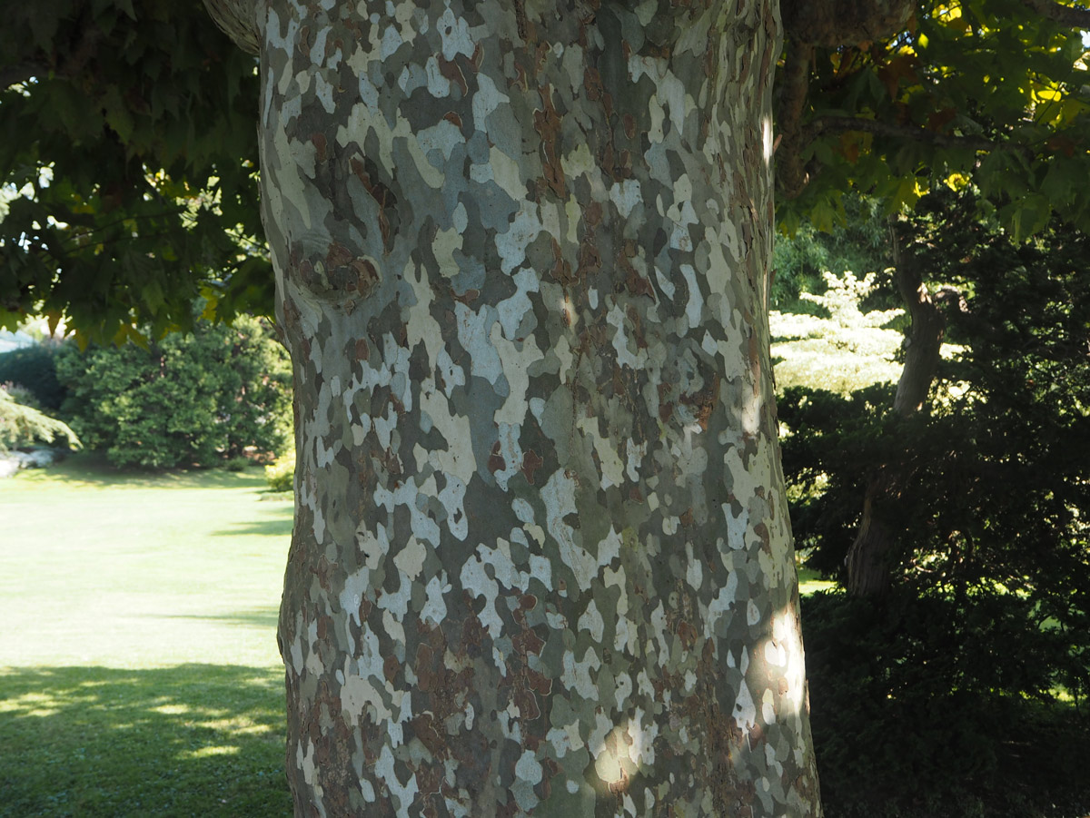 Even the bark on the trees were pretty in the gardens, it looked like camouflage